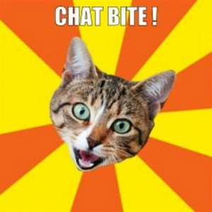 chat bite